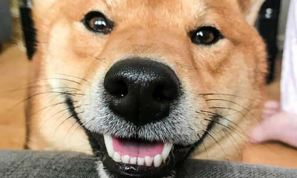 Resultado de imagen de un perro sonriendo